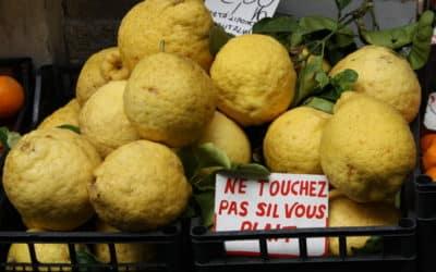 Les citrons d'Amalfi.